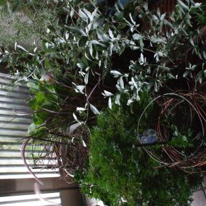 庭や鉢植えの台風対策🌀秋の虫の音に🐜朝から癒される🌄