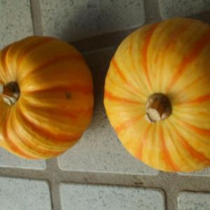 ジャックオーランタン🎃ハロウィン装飾用👻オレンジ色のかぼちゃを頂きました(*^▽^*)