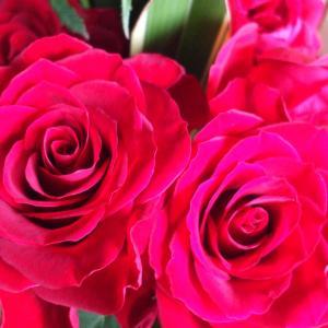 薔薇のフラワーアレンジメントから🌹ベースのグリーン🍃のみにしてみた所👀雰囲気が有って(⋈◍>◡<◍)。✧♡良いかも(^^♪