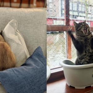 【ハリウッドも夢じゃニャイ】演技派ネコがドラマチックすぎると話題にwww