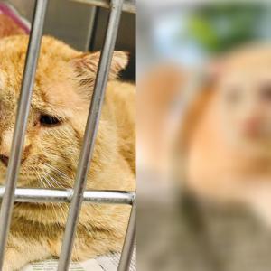 この世で一番不幸な猫が宇宙一幸せな猫になった運命の出会いに涙した。
