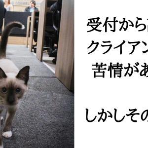 ドン底からキャリア職へ就いた野良猫が話題に。大役も果たす。