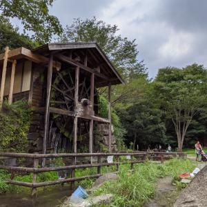 神奈川県大和市、川遊びのできる公園!