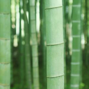 禰豆子(ねずこ)が竹をくわえてる理由は?竹をなぜくわえているのかを解説!