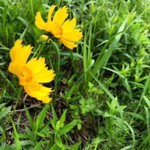 川沿いに咲いていた花