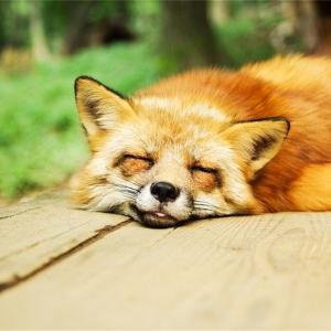 睡眠音楽で気持ちよく睡眠zzz