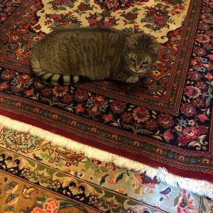 絨毯のクリーニング代