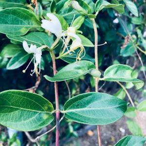 外来種と原始林