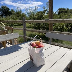 今日は月見酒の日・リンゴ狩り・ハードサイダー・ドーナツ・むつりんご・