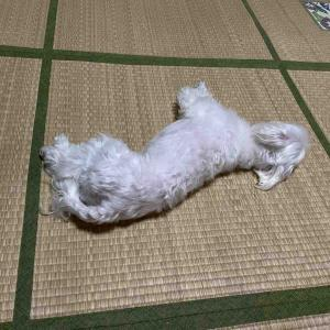 暑いですなぁ〜カーペットを外しました。