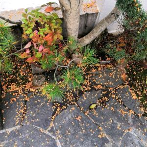 散りゆく金木犀の花