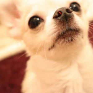 「ほっこりする犬の動画ツイート」を集めてみた!(2020年7月10日)