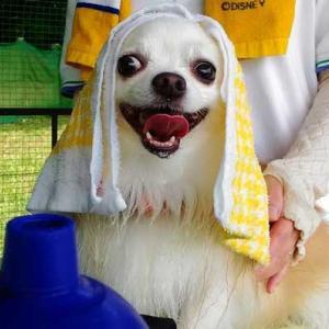 犬の熱中症に注意!犬は人間よりも暑さに弱いです。