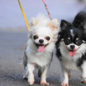犬のノーリードの散歩はリスクが高い。