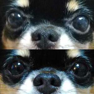 犬の目の病気でセカンドオピニオンという方法もあります。