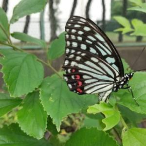 自然と調和出来る生き方を模索します。