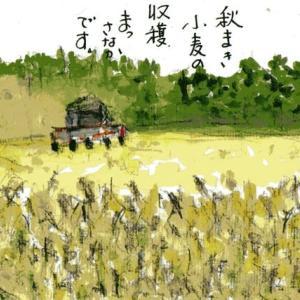 「絵手紙もらいました―小麦収穫―」について考える
