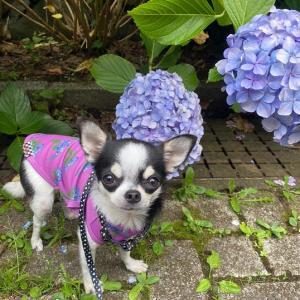 紫陽花と穴の話