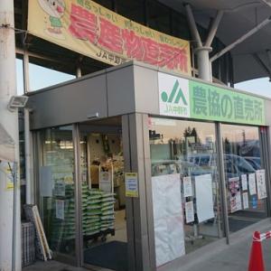 志賀高原からの帰り道
