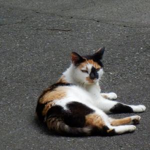 別荘地の猫