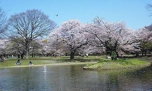 代々木公園楽しみましょう!!