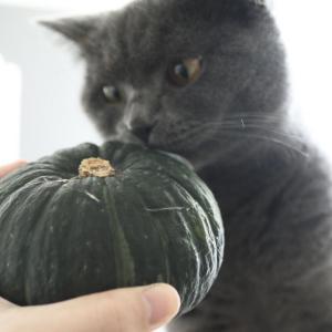 【stub】ホクホク美味しい!かぼちゃの煮物。