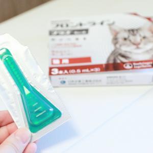 【簡単】月に一回のフロントラインで寄生虫予防!