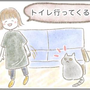 【ストーカー?】トイレについて来る猫