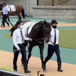シルク募集馬:リアアントニア20と、姉リアグラシア