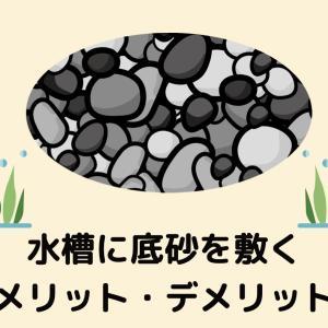 【初心者は砂利・底砂を敷こう】水槽に底砂を敷くメリット・デメリット