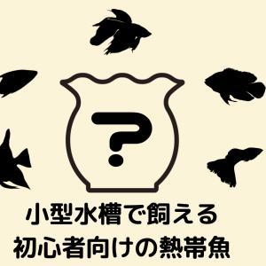 【珍種&定番種20選】小型水槽で飼える初心者におすすめの熱帯魚【2020年最新】