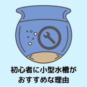 初心者こそ小型水槽を使うべき5つの理由【メンテナンス性を重視!】