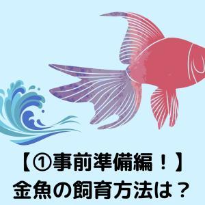 【①事前準備編!】金魚の飼育方法は?初心者向けにわかりやすく解説!