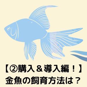 【②購入&導入編!】金魚の飼育方法は?購入から水槽に入れるまでを解説!