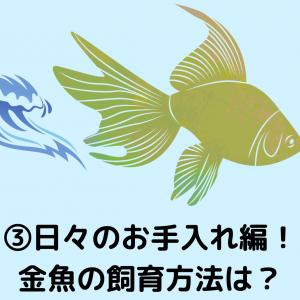 【③日々のお手入れ編!】金魚の飼育方法は?のあげ方からお掃除などを紹介!