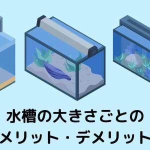【熱帯魚を飼う前に確認!】水槽の大きさごとのメリット・デメリット【初心者必読!】