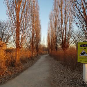 niziuまこちゃんの公園までお散歩