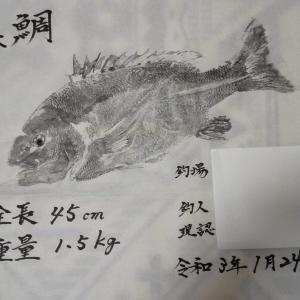 クワとっちゃんの魚拓2