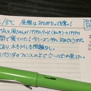 【万年筆・インク】妻のねこ日記・2020年06月第1週!【猫写真と猫イラスト】