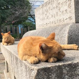 【神戸市】たちばな湯