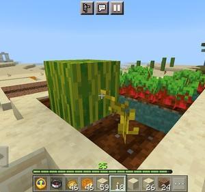 スイカ畑と馬小屋
