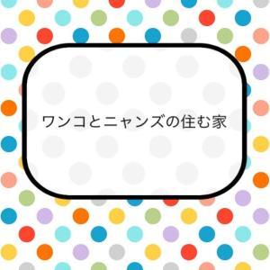 今日の3捨て【ペット用品】