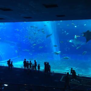 旅 日本 沖縄旅行 2日目① 美ら海水族館