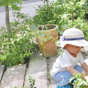 お庭とプール。おうちで過ごす夏の週末日記