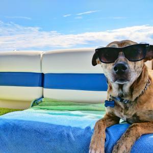 夏の暑さから愛犬を守る!犬用便利グッズをご紹介!