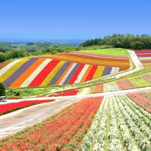四季彩の丘|一度は写真に撮りたい丘の花畑風景(美瑛町)