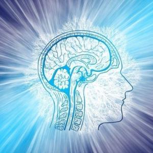 脳の仕組み 記憶、感情、運動、病気のメカニズム