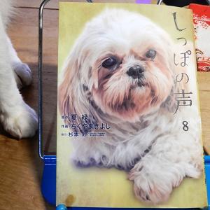 『しっぽの声』第8巻 作画:ちくやまきよし、原作:夏緑、協力:杉本彩