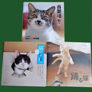写真集『百面相ねこ』『踊る猫』『猫あるある図鑑』