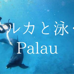 「イルカと泳ぐ」夢を叶えてくれるパラオ【ドルフィンズパシフィック】